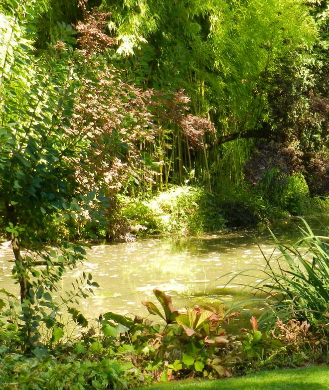 Jardin japonais 5 la r gion parisienne le bassin for Japonais rambouillet